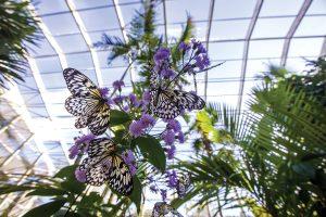 Fairchild Botanic Garden, Butterflies, Images c_o Fairchild Botanic Garden