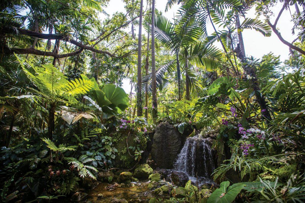 Fairchild Botanic Garden, Waterfall, Images c_o Fairchild Botanic Garden